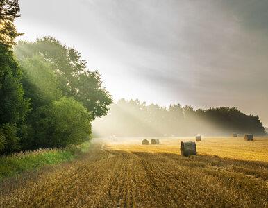 Złota setka polskiego rolnictwa – Rekordowy rok w polskim rolnictwie