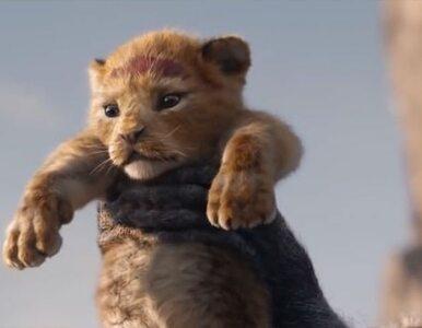 """Powstaje kontynuacja filmu """"Król Lew"""". Zaskakujący wybór reżysera"""