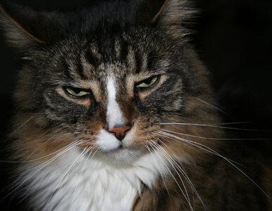 Koty wyjadły rybki, winny właściciel. Zapadł wyrok ws. sąsiedzkiego sporu