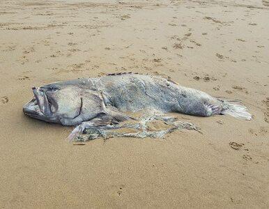 Znaleźli na plaży ogromną rybę jak z horroru. Nie mieli pojęcia, co to jest
