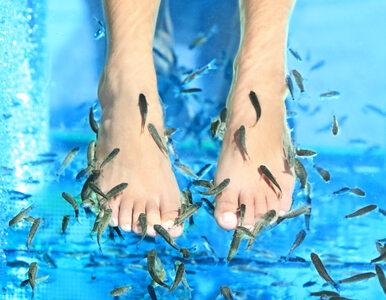 Poszła na fish pedicure, straciła paznokcie?