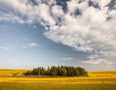 Biologizacja naturalnym sposobem na zrównoważenie rolnictwa
