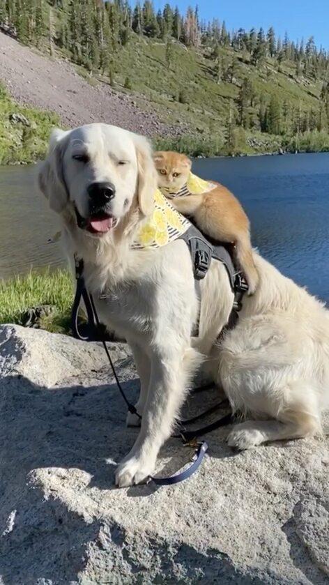 Pies Samson i kot Cleo