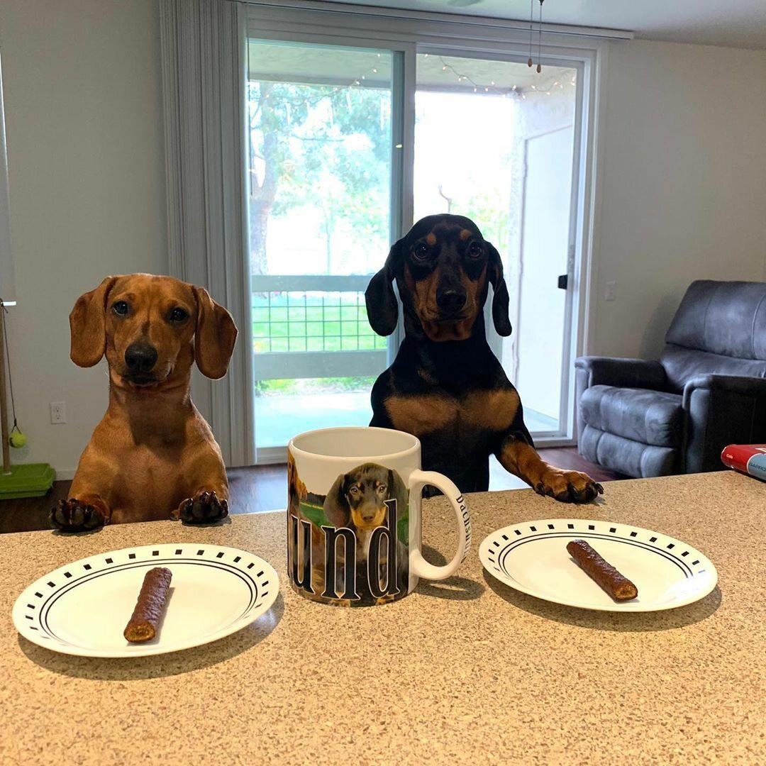 Cocoa i Chorizo