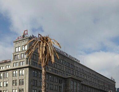 Uschnięta palma na rondzie de Gaulle'a w Warszawie. Co się stało?