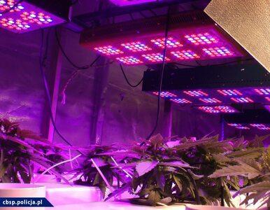 Tak nowoczesnej plantacji marihuany policjanci jeszcze nie widzieli....