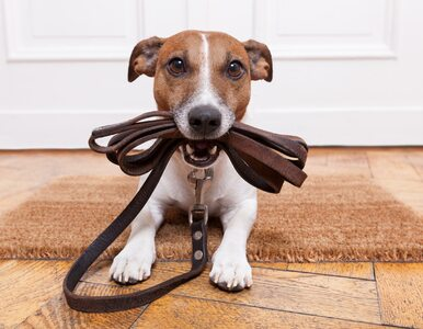 Twój pies boi się fajerwerków lub kosiarki? Oto, co może mu pomóc