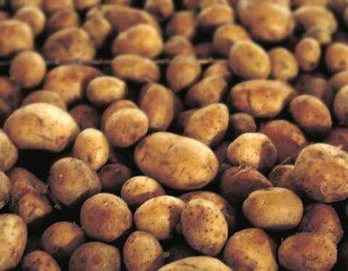 Na nadciśnienie - ziemniak