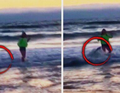 Nastolatka chciała zrobić idealne selfie. Zaatakował ją lew morski