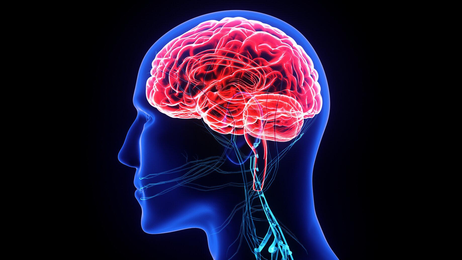 Układ nerwowy ośrodkowy (centralny) składa się z: