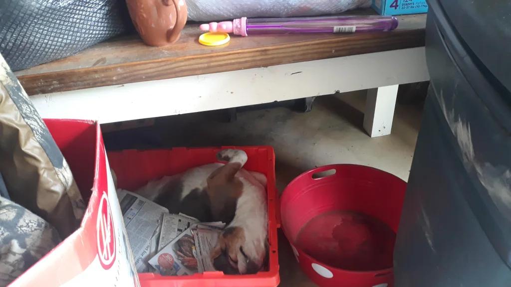 Niespodziewany gość w pudełkach w garażu