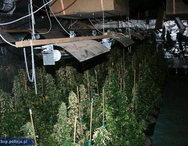 Policjanci przejęli 20 kg narkotyków i zlikwidowali plantację marihuany