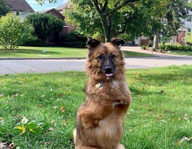 Pies wykopał dziurę w ogrodzie. Właściciel odciął mu za to przednie łapy
