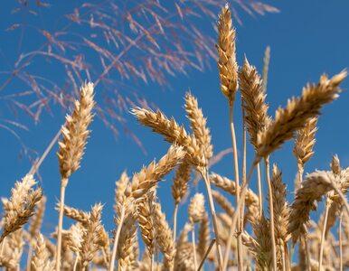BASF: W kierunku zrównoważonego rolnictwa