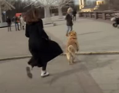 Pies przerwał reporterce relację na żywo. Incydent uchwyciła kamera
