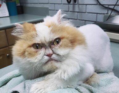 Internauci znaleźli już nowego Grumpy Cata. Ten przy okazji jest...
