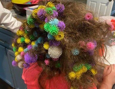 Brat wczepił siostrze we włosy 150 zabawkowych rzepów. Rodzice wyciągali...