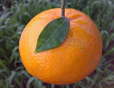 Mandarynki pomagają w odchudzaniu