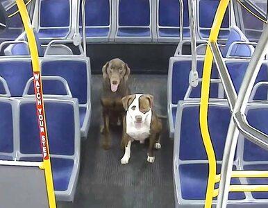Dwa zagubione psy wróciły do domu na święta. Wszystko dzięki kierowcy...
