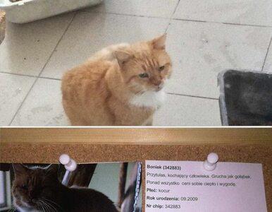 Boniek oferuje bilety na mecz reprezentacji za adopcję kota. Posłanka...