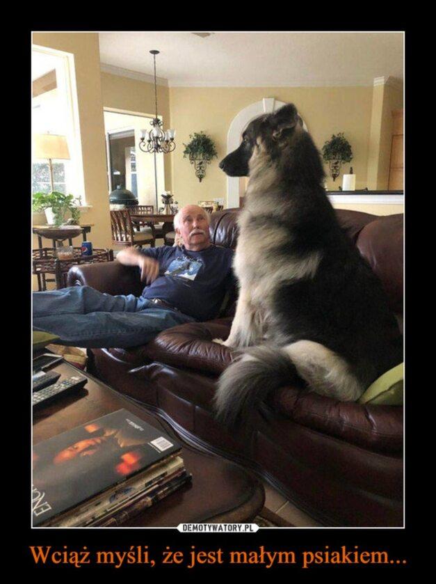 Mem z okazji Dnia Psa