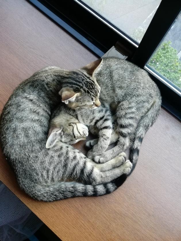 Przytulające się koty