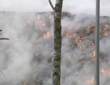 Wysypiska znów zapłoną? Pożar 12-metrowej hałdy śmieci w Łódzkiem