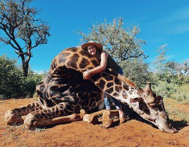 Merelize van der Merwe wzbudza kontrowersje. Ostatnio zabiła żyrafę