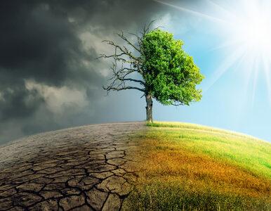Zielona energia i ograniczenie emisji dwutlenku węgla skutecznymi...