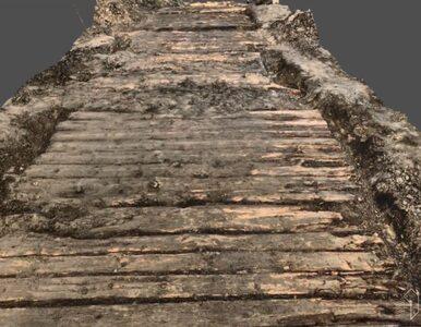 Archeolodzy odkopali kilkusetletnią drewnianą drogę. Całą zeskanowali z...