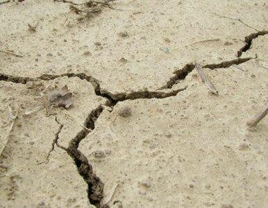 Uganda: 30 ofiar osunięcia się ziemi