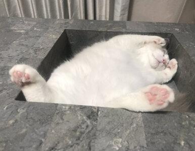 Czasem niezwykłe, czasem zabawne. Koty to mistrzowscy fotomodele