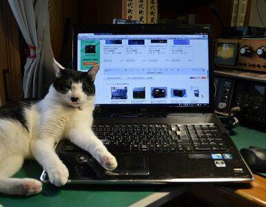 Co robić, kiedy kot wchodzi na klawiaturę i przeszkadza w pracy? Na...