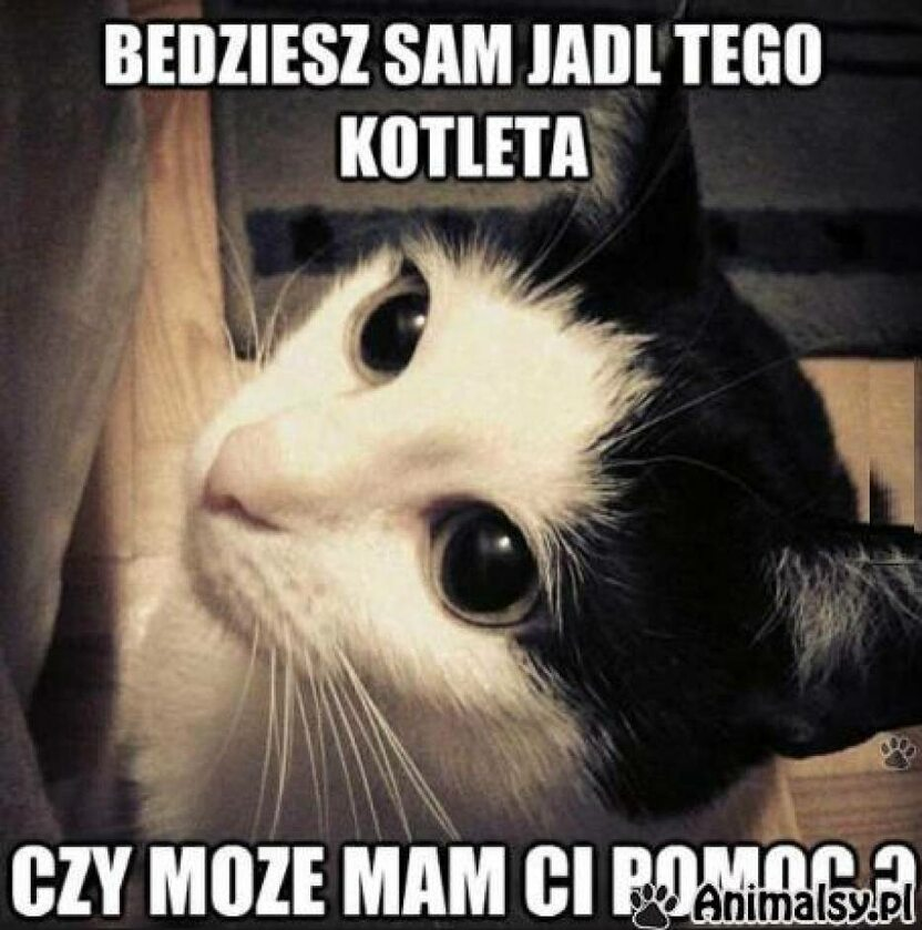 Memy z kotem w roli głównej