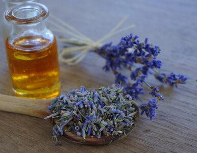 Olejek lawendowy – działanie i sposób użycia