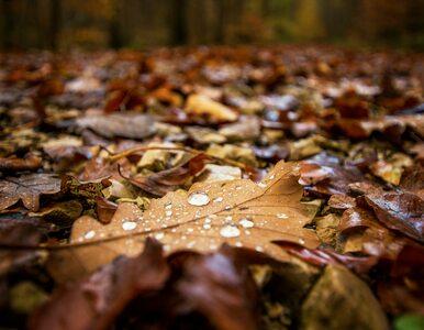 Niedziela deszczowa i wietrzna. W kolejnych dniach poprawa pogody
