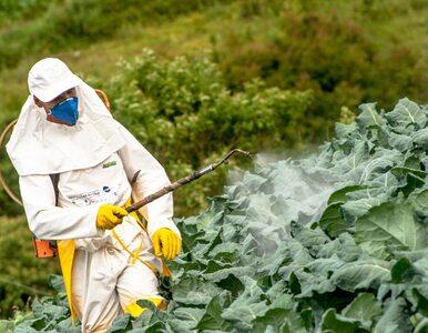 Epidemia otyłości to wina tego powszechnie stosowanego pestycydu?...