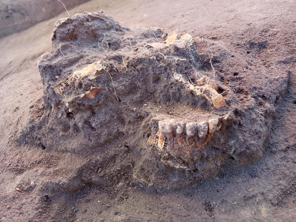 Słabo zachowany pochówek szkieletowy