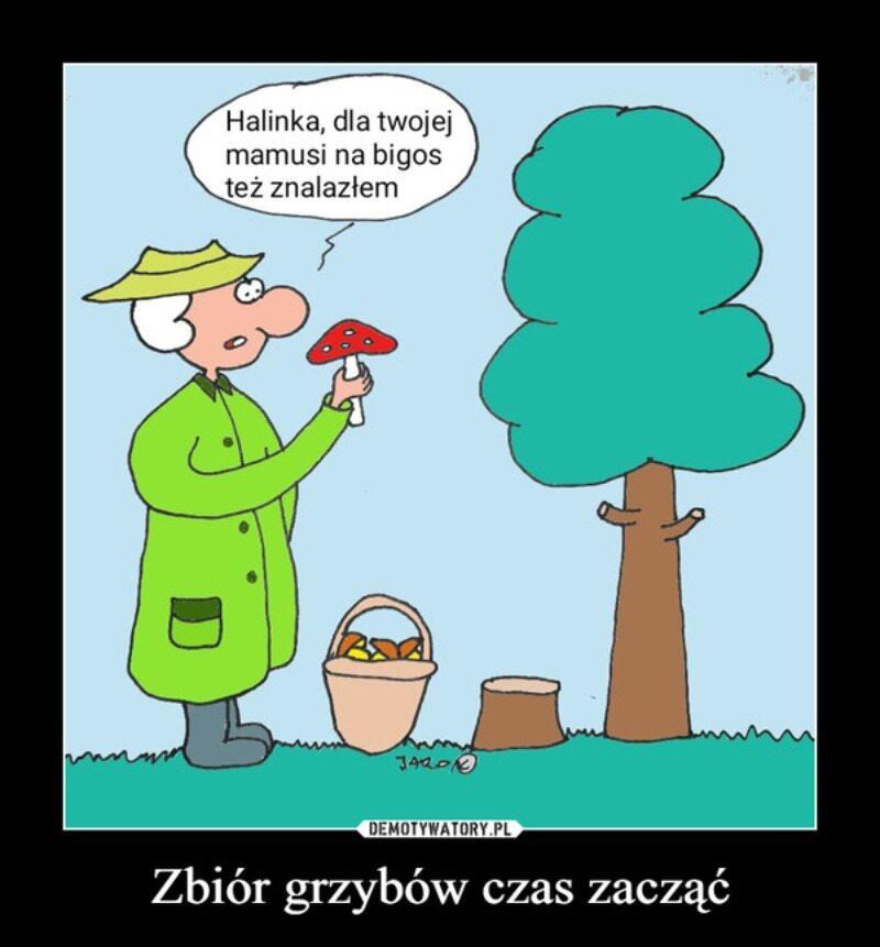 Memy o grzybobraniu