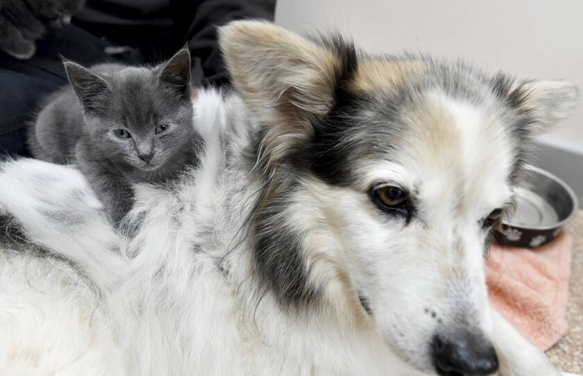 Suczka Skye i kocięta