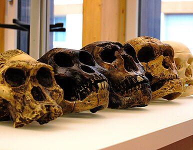 Neandertalczycy hibernowali jak niedźwiedzie? Naukowcy: Tak radzili...