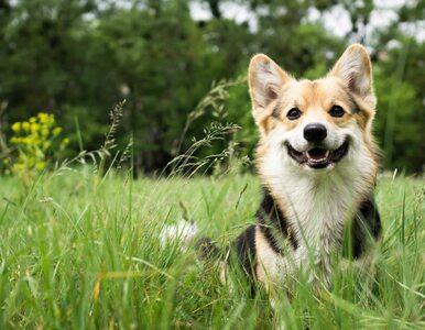 """Psy wykorzystują """"zmysł magnetyczny"""". Będziecie zaskoczeni, w jaki sposób"""