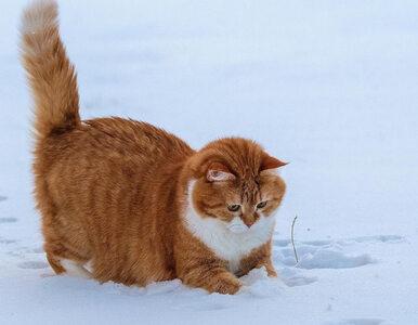 """Zima go nie zaskoczyła! Ten kot zachowuje się jak """"troll"""""""