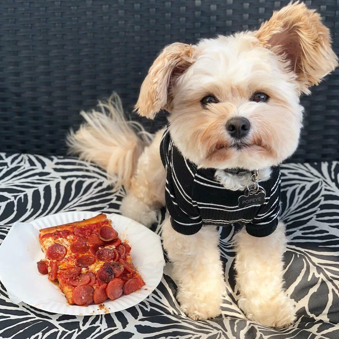 Popeye, pies recenzent kulinarny