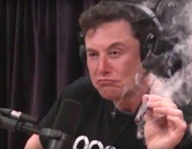 Elon Musk palił marihuanę podczas wywiadu na żywo