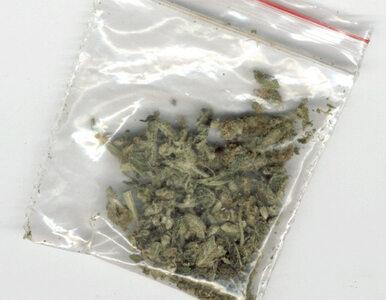 Stażysta z ratusza palił marihuanę w czasie pracy
