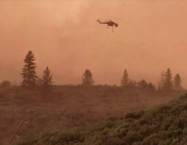 """Dramatyczna sytuacja w Kalifornii. """"Tornada ognia"""" sieją spustoszenie,..."""