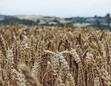 Tytani polskiego rolnictwa