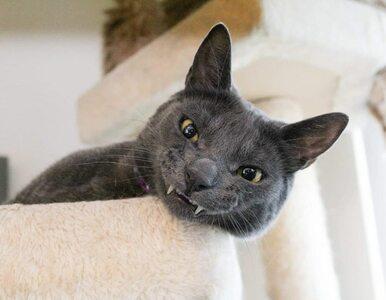 Kot z wadą zgryzu gwiazdą mediów społecznościowych. Wolfiemu nie dawano...