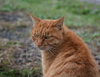 Turysta zmarł po podróży do Maroka. Został ugryziony przez kota